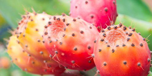 ultra-nutrients-prickly-pear-cactus-fruit-mobiel